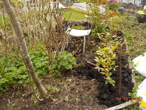 コロナ引きこもりのおかげで、庭がきれいになりました。_a0173527_07571906.jpg