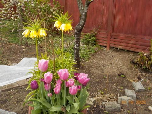 コロナ引きこもりのおかげで、庭がきれいになりました。_a0173527_07581399.jpg