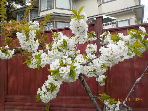 コロナ引きこもりのおかげで、庭がきれいになりました。_a0173527_07585727.jpg