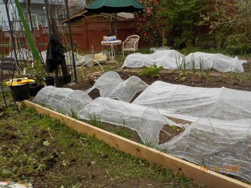 コロナ引きこもりのおかげで、庭がきれいになりました。_a0173527_08003880.jpg