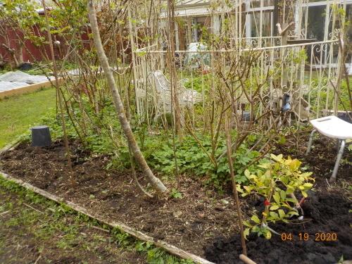 コロナ引きこもりのおかげで、庭がきれいになりました。_a0173527_08012957.jpg