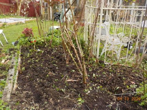コロナ引きこもりのおかげで、庭がきれいになりました。_a0173527_08022374.jpg