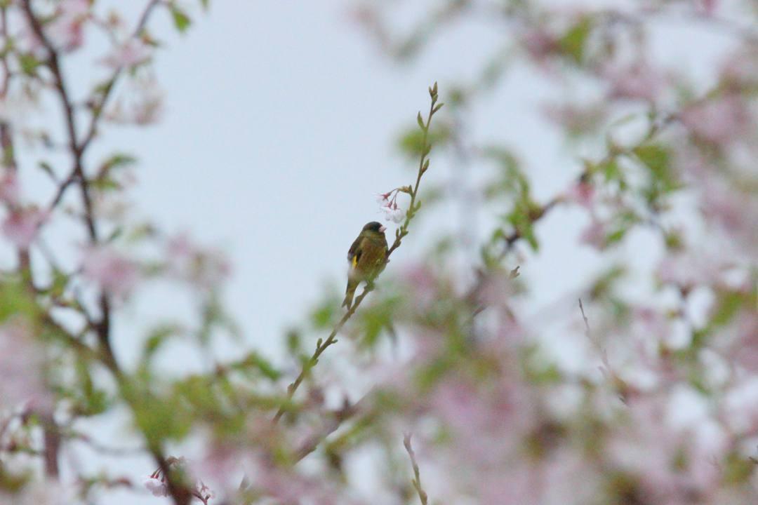 今日も野鳥_e0403850_18184816.jpg