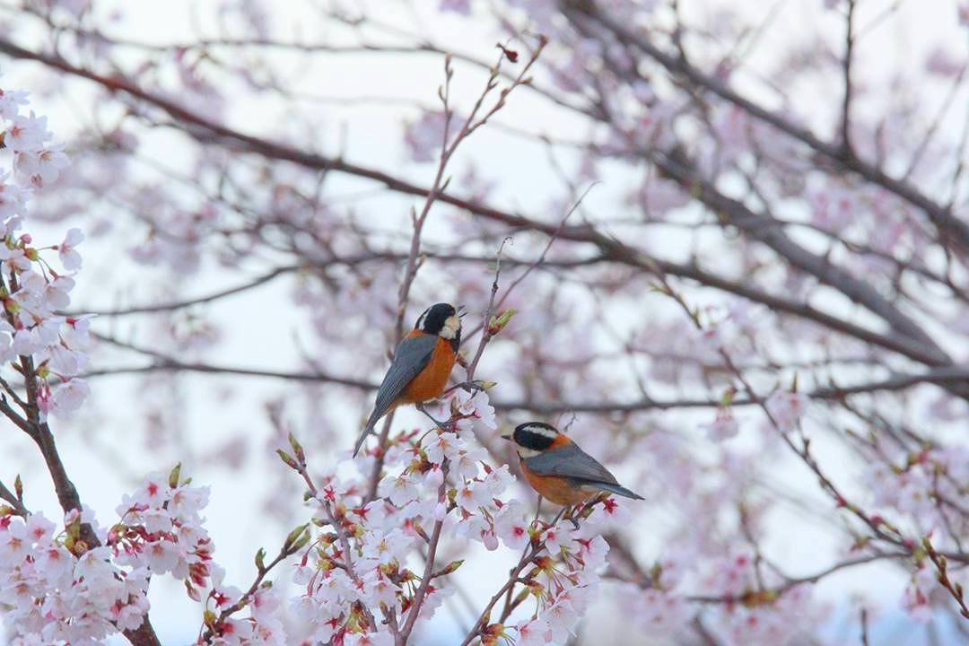 今日も野鳥_e0403850_18185642.jpg