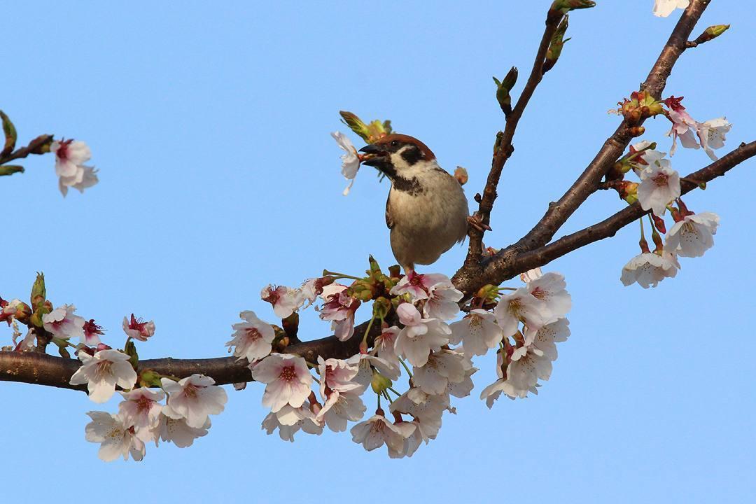今日も野鳥_e0403850_18185972.jpg