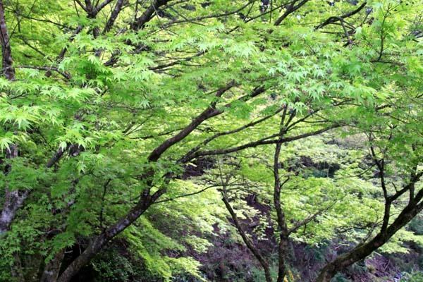 新緑の始まり 貴船1_e0048413_22411354.jpg