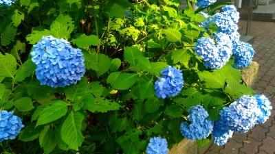 おうちでカラーセラピー♪【ブルー】_c0200917_14291047.jpg