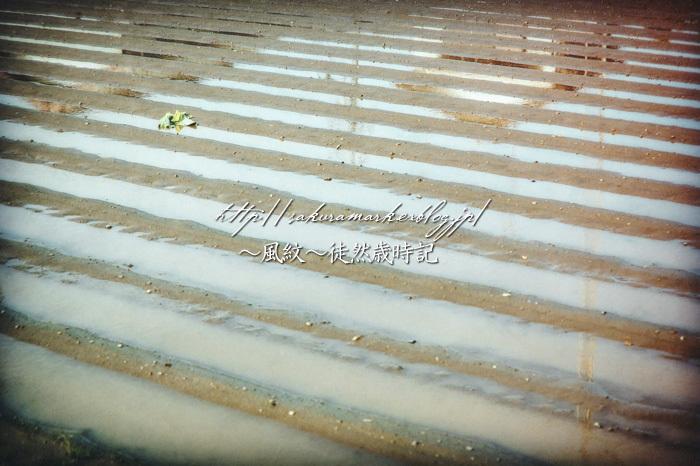 水没する畝。_f0235723_15080043.jpg