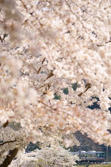 4月7日 福知山線の春模様をサクッと撮る_f0037227_22025510.jpg