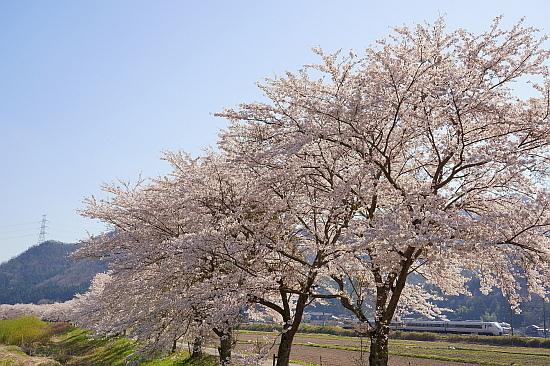 4月7日 福知山線の春模様をサクッと撮る_f0037227_22025666.jpg