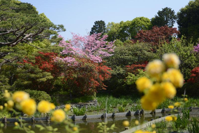 京都の想い出(改訂版)_e0367330_10034507.jpg