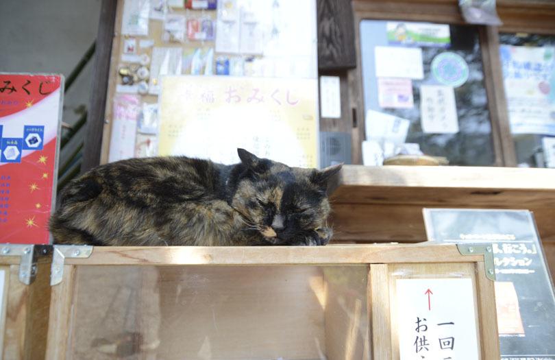 京都の想い出(改訂版)_e0367330_10054438.jpg