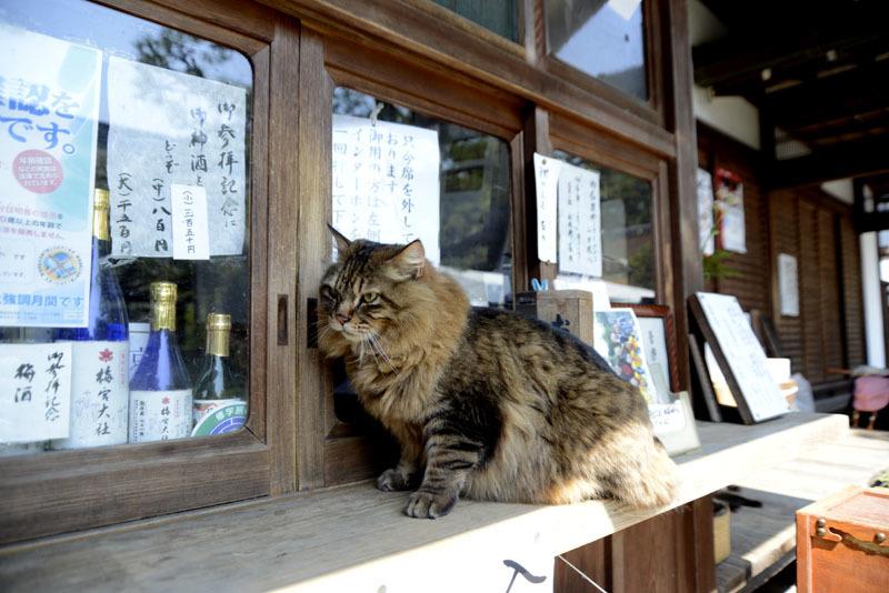 京都の想い出(改訂版)_e0367330_10061452.jpg