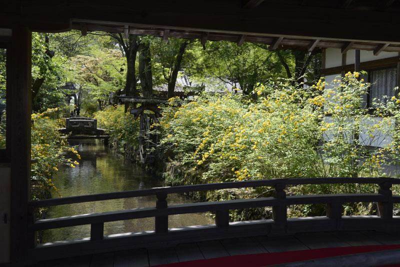 京都の想い出(改訂版)_e0367330_10084687.jpg