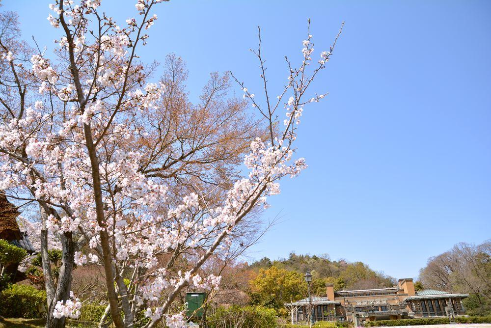 帝国ホテルと桜1_e0373930_23000818.jpg