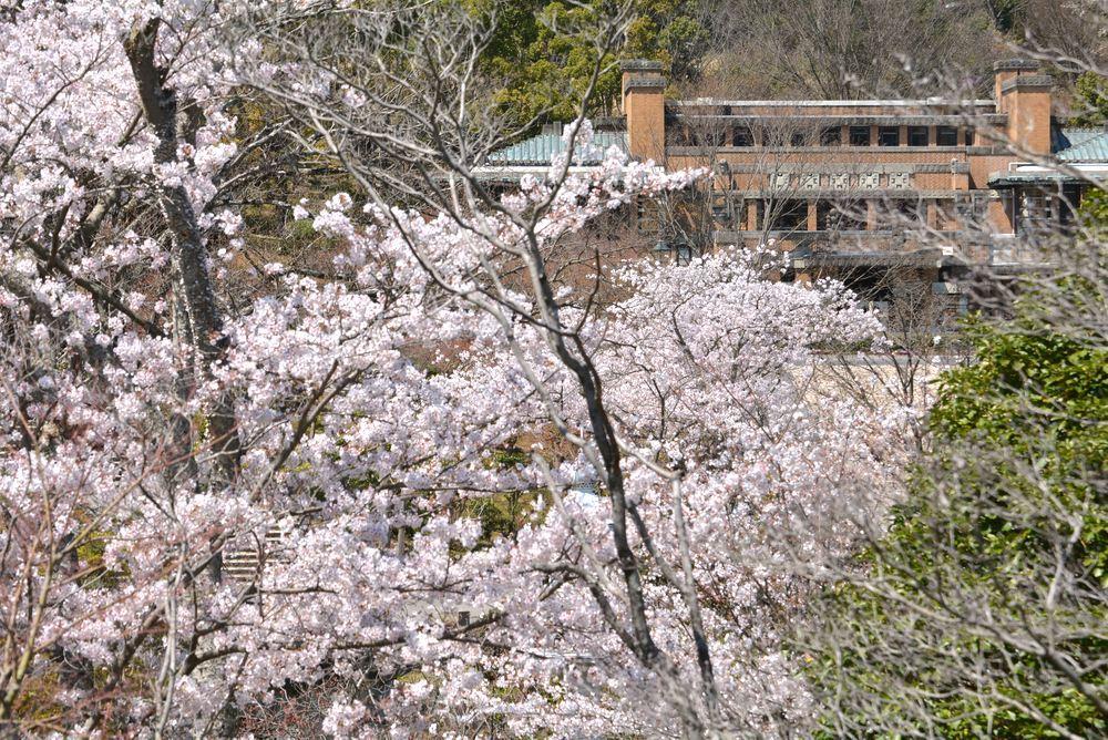 帝国ホテルと桜2_e0373930_23200525.jpg