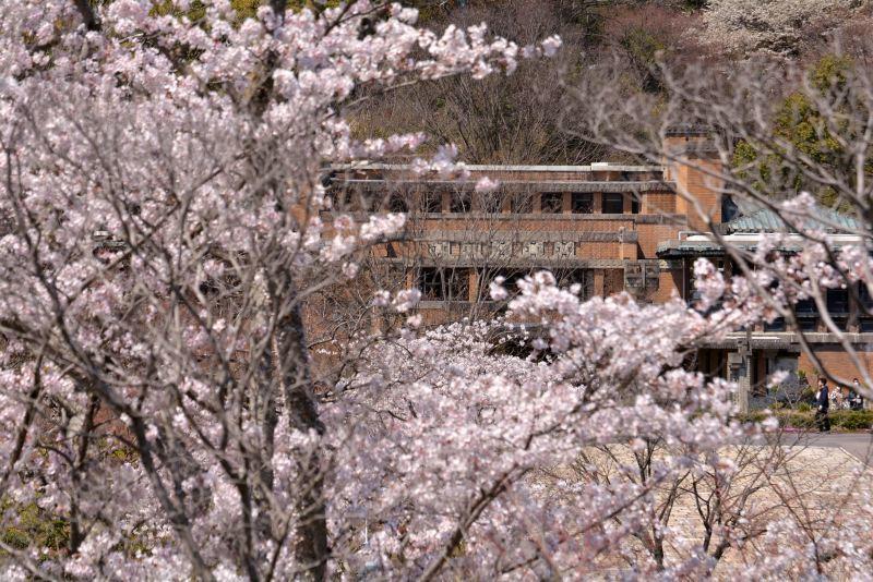 帝国ホテルと桜2_e0373930_23200554.jpg