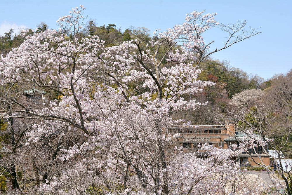 帝国ホテルと桜2_e0373930_23200599.jpg