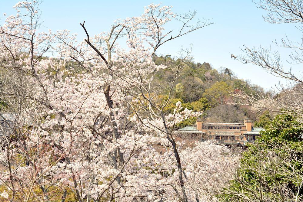 帝国ホテルと桜2_e0373930_23200625.jpg