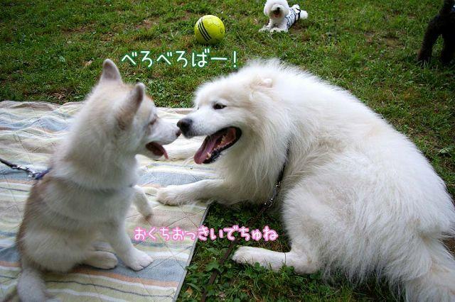 最愛の_c0062832_03105497.jpg