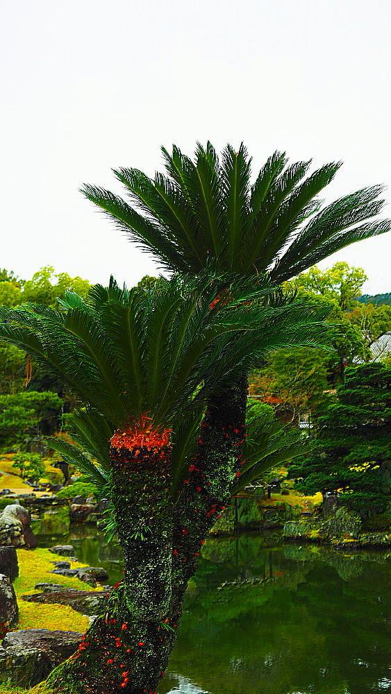 醍醐寺三宝院庭園_a0287533_23385631.jpg