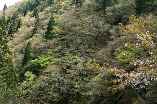 新緑・・・アイカ(地域通貨) 10000円と発熱外来_d0005250_1841459.jpg