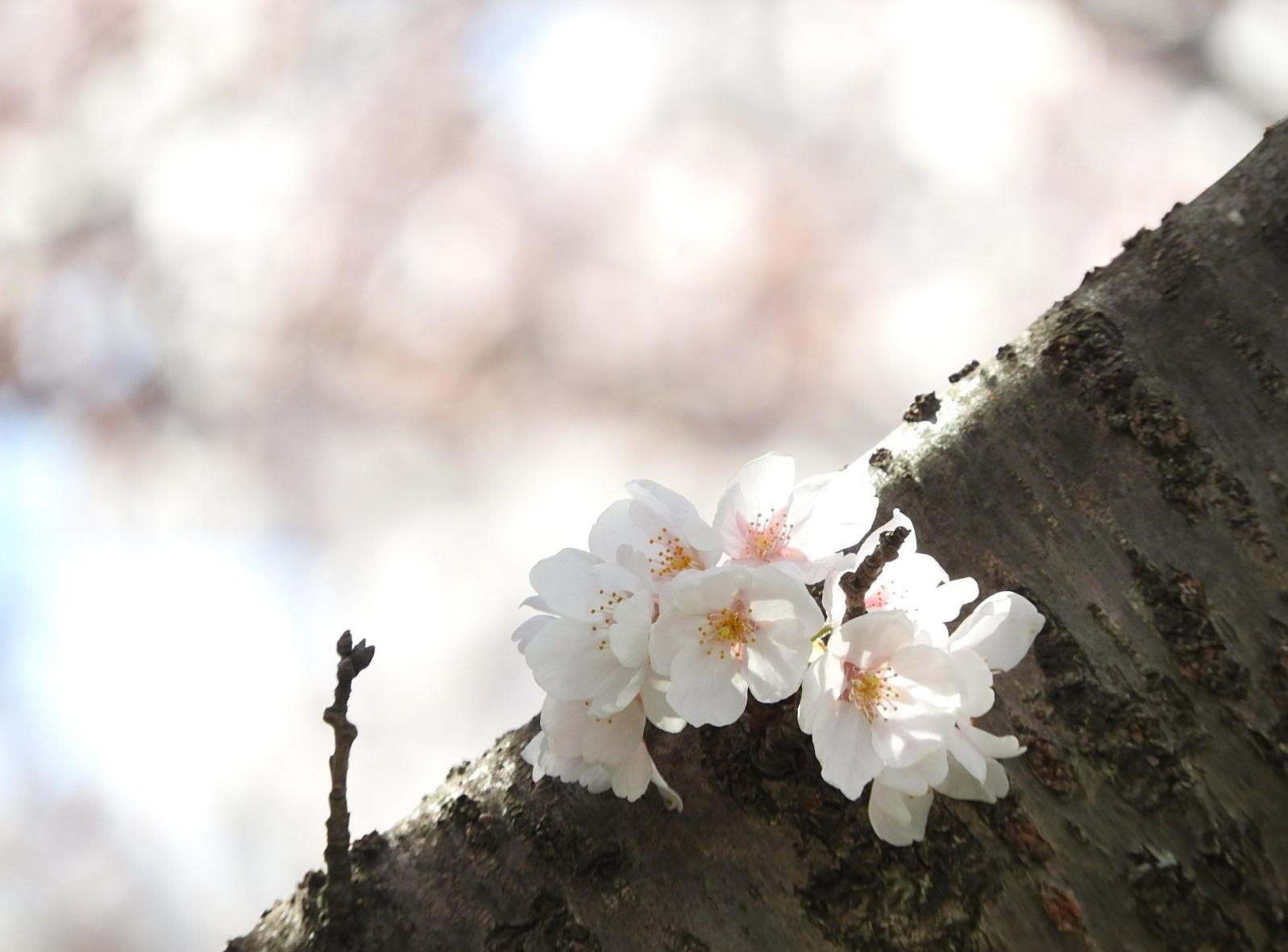 また来ぬ春_e0406450_10582348.jpg