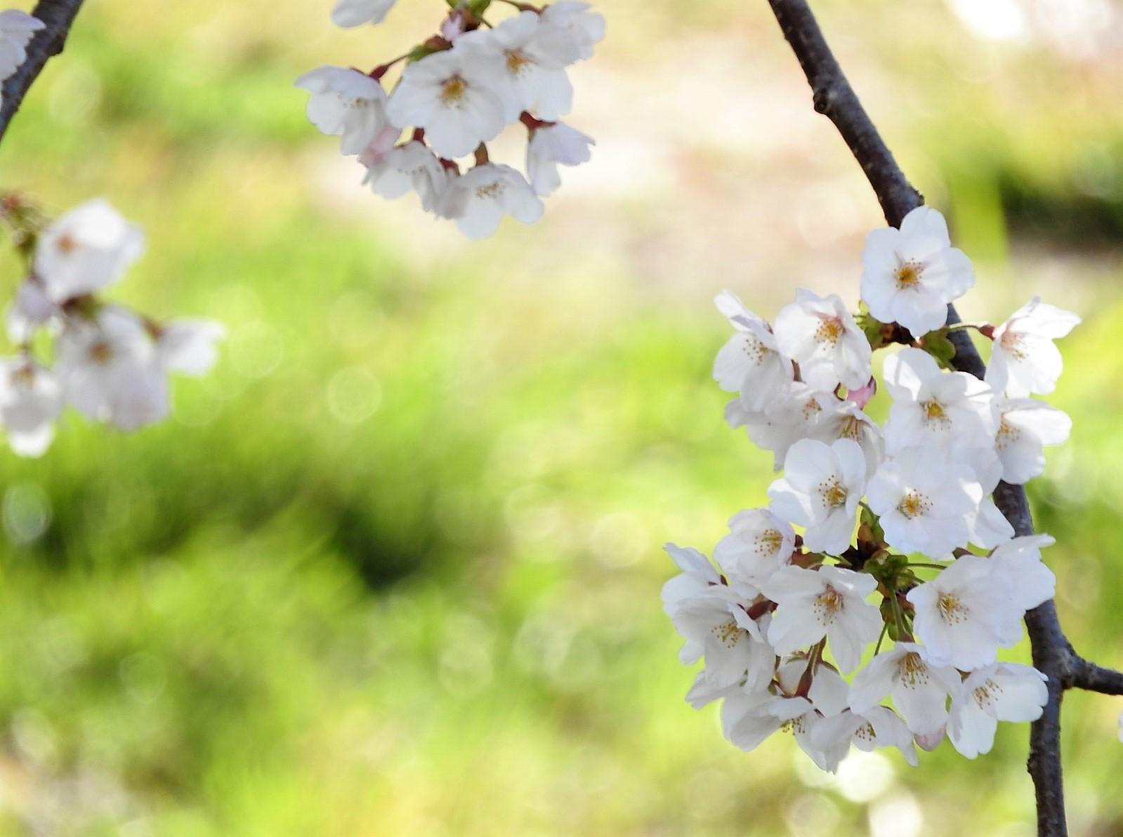 また来ぬ春_e0406450_10584877.jpg