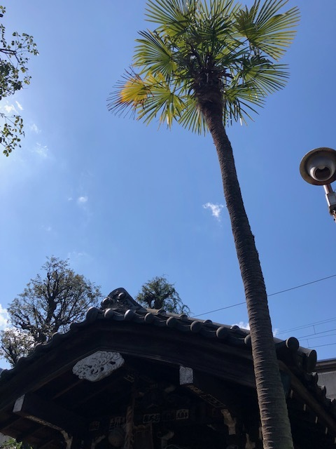 大森海岸~磐井神社の堀跡、ホテル街散策_d0250051_20502326.jpg