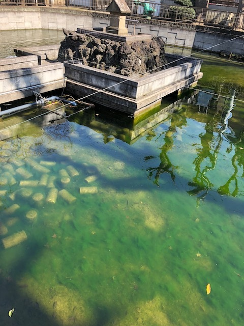 大森海岸~磐井神社の堀跡、ホテル街散策_d0250051_20502469.jpg
