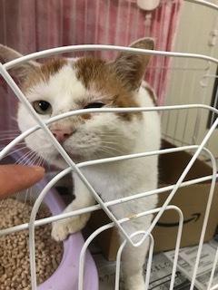 【犬猫・移動先募集】センター(本所)収容(4/24訪問)_f0242002_16150405.jpg