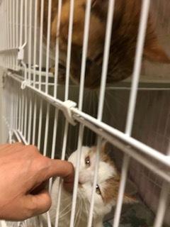 【犬猫・移動先募集】センター(本所)収容(4/24訪問)_f0242002_16325323.jpg