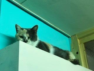 【犬猫・移動先募集】センター(本所)収容(4/24訪問)_f0242002_16393357.jpg