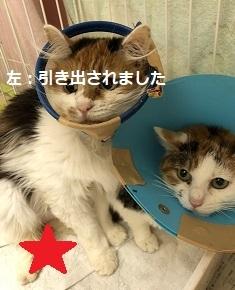 【犬猫・移動先募集】センター(本所)収容(4/24訪問)_f0242002_21401058.jpg