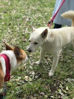 【犬猫・移動先募集】センター(本所)収容(4/24訪問)_f0242002_21471592.jpg