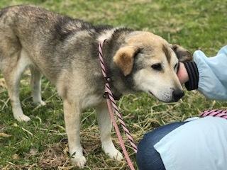 【犬猫・移動先募集】センター(本所)収容(4/24訪問)_f0242002_21490789.jpg