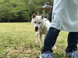 【犬猫・移動先募集】センター(本所)収容(4/24訪問)_f0242002_21493612.jpg