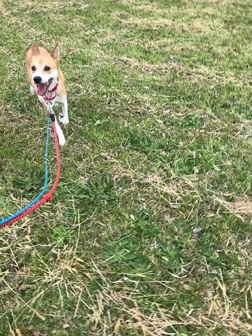 【犬猫・移動先募集】センター(本所)収容(4/24訪問)_f0242002_22125191.jpg