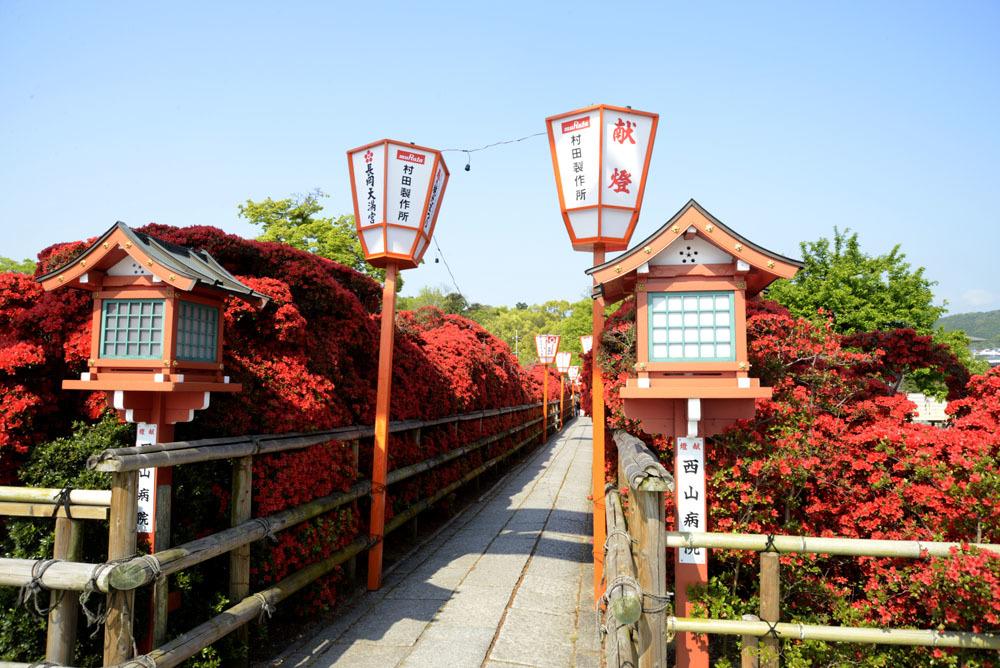 京都の想い出(改訂版)_e0367330_09392223.jpg