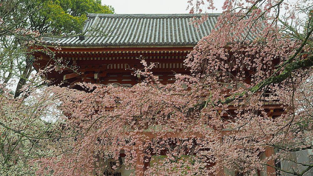 醍醐寺 桜Ⅲ_a0287533_22350689.jpg