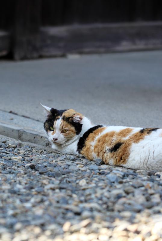 京都市中京区_b0186148_18403844.jpg