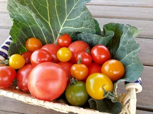 リピーターも続出!年間売上第1位のトマトの魅力_c0141652_17413133.jpg