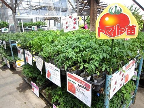 リピーターも続出!年間売上第1位のトマトの魅力_c0141652_17413201.jpg