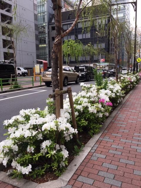 白いツツジ☆_c0228466_15521512.jpg