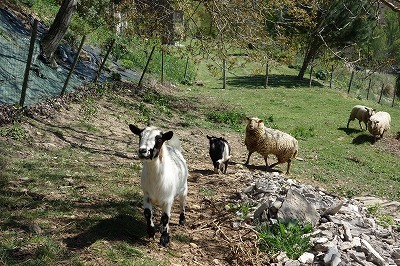 """フランス古道具 \""""P\"""" 生活の飾り-羊のパネル_e0051968_12033321.jpg"""