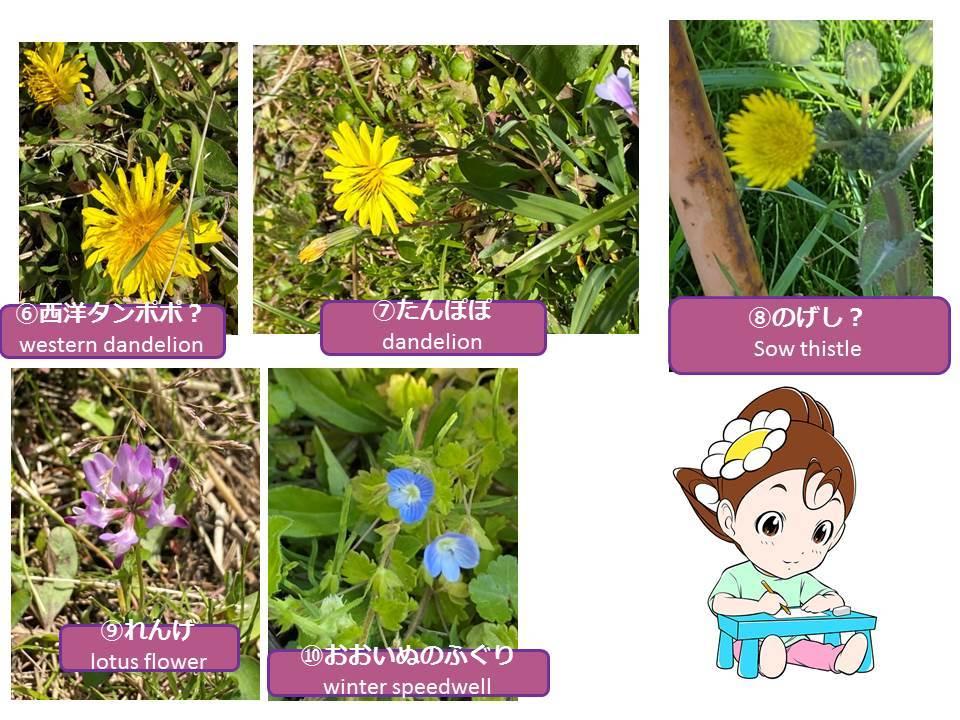 Spring is just around the corner._f0321473_11353983.jpg