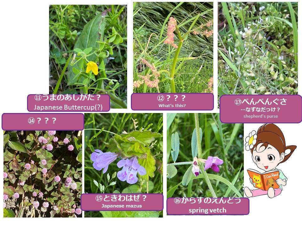 Spring is just around the corner._f0321473_11355503.jpg