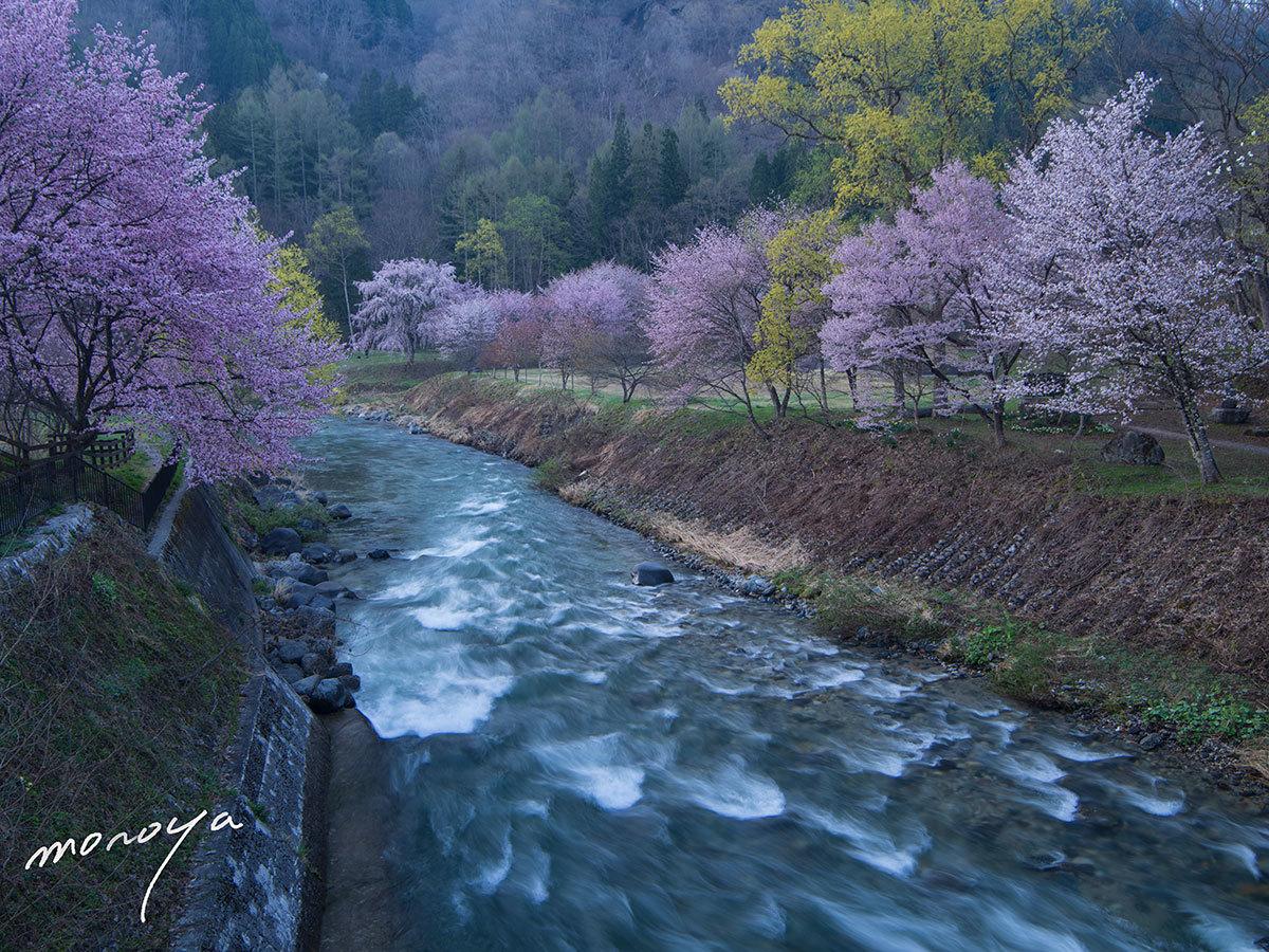 白馬村の春2_c0085877_06041376.jpg