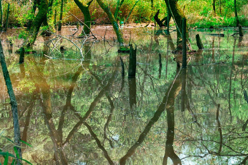森の水面_b0126495_18465691.jpg