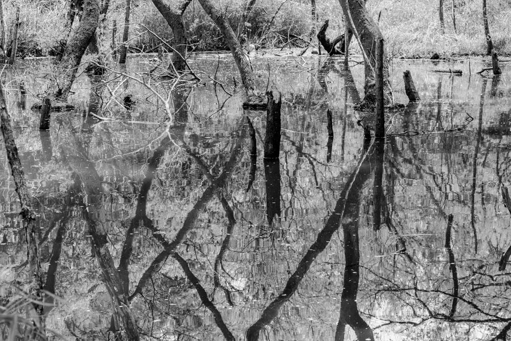 森の水面_b0126495_18470339.jpg